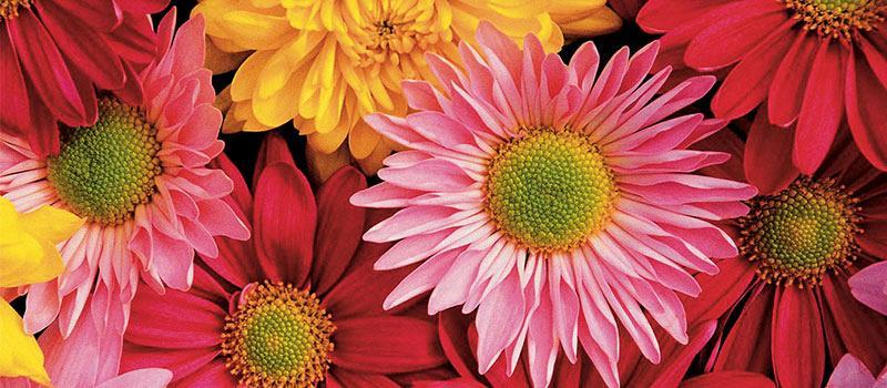 Bezoek onze vernieuwde bloemenafdeling!